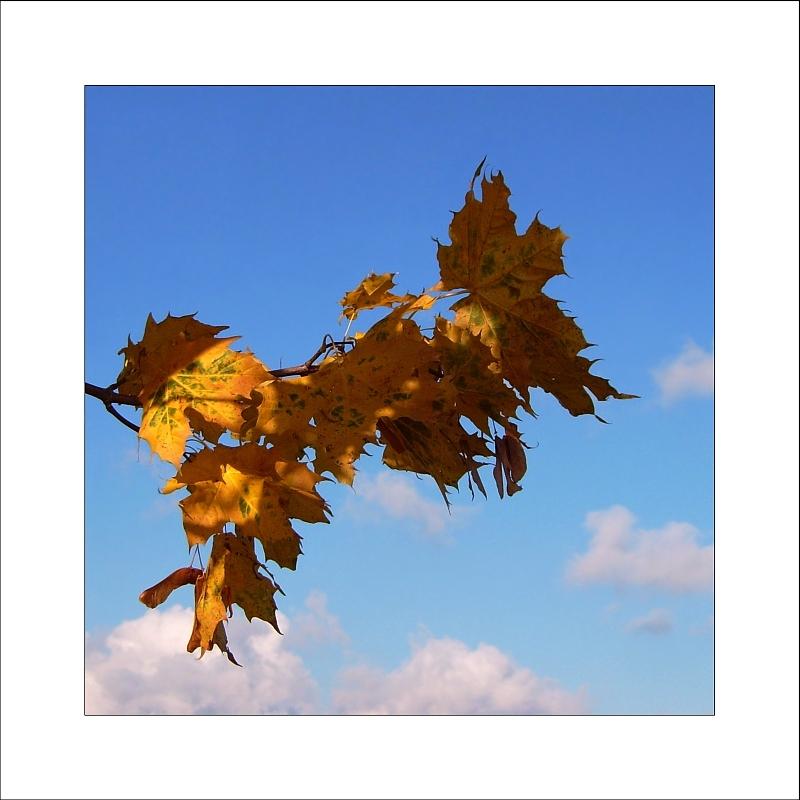 """"""""""" Autumn fairy tale """""""""""