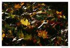 autumn feelings 3