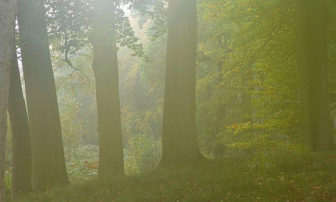 Autumn fog (2)