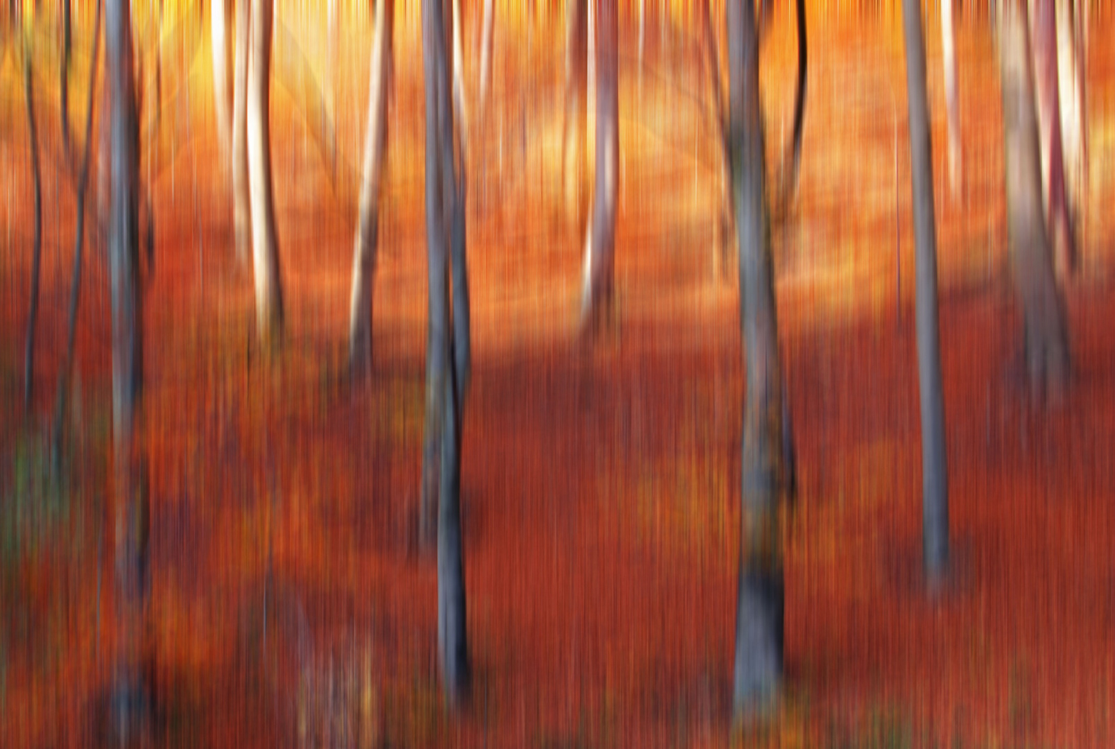 * autumn forest abstract *