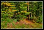 autumn forest tales (1)