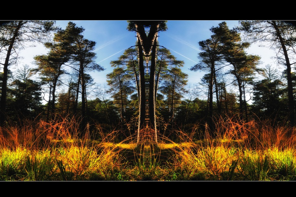 autumn forest tales (2)
