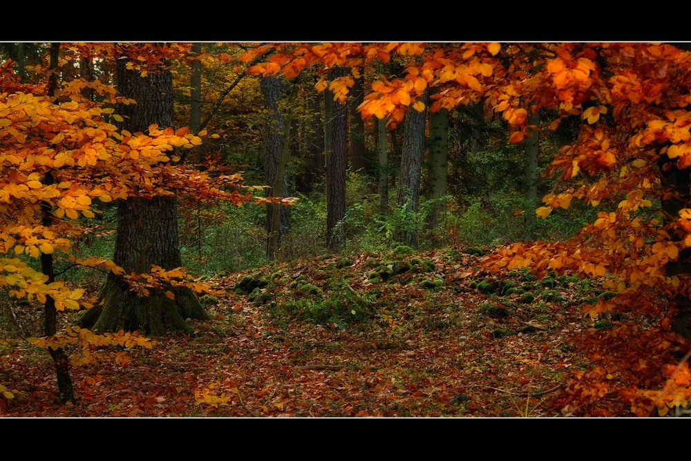 autumn forest tales (3)