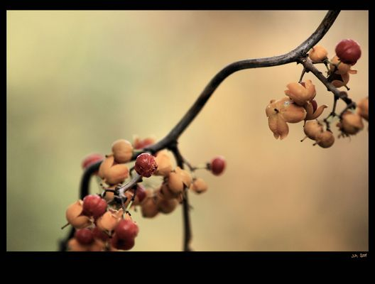 autumn fruits VI