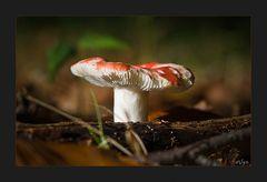 Autumn Fungi #2