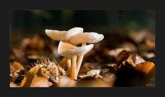 Autumn Fungi #3
