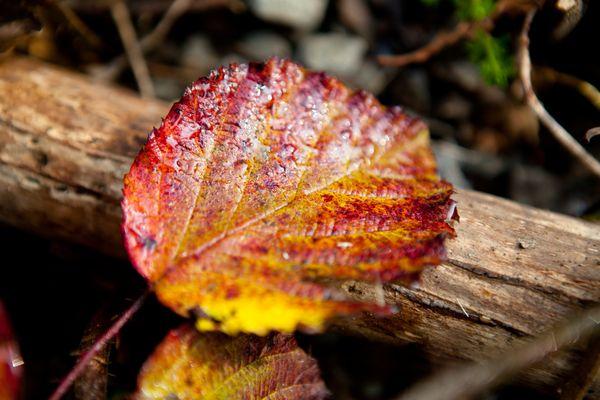 Autumn I