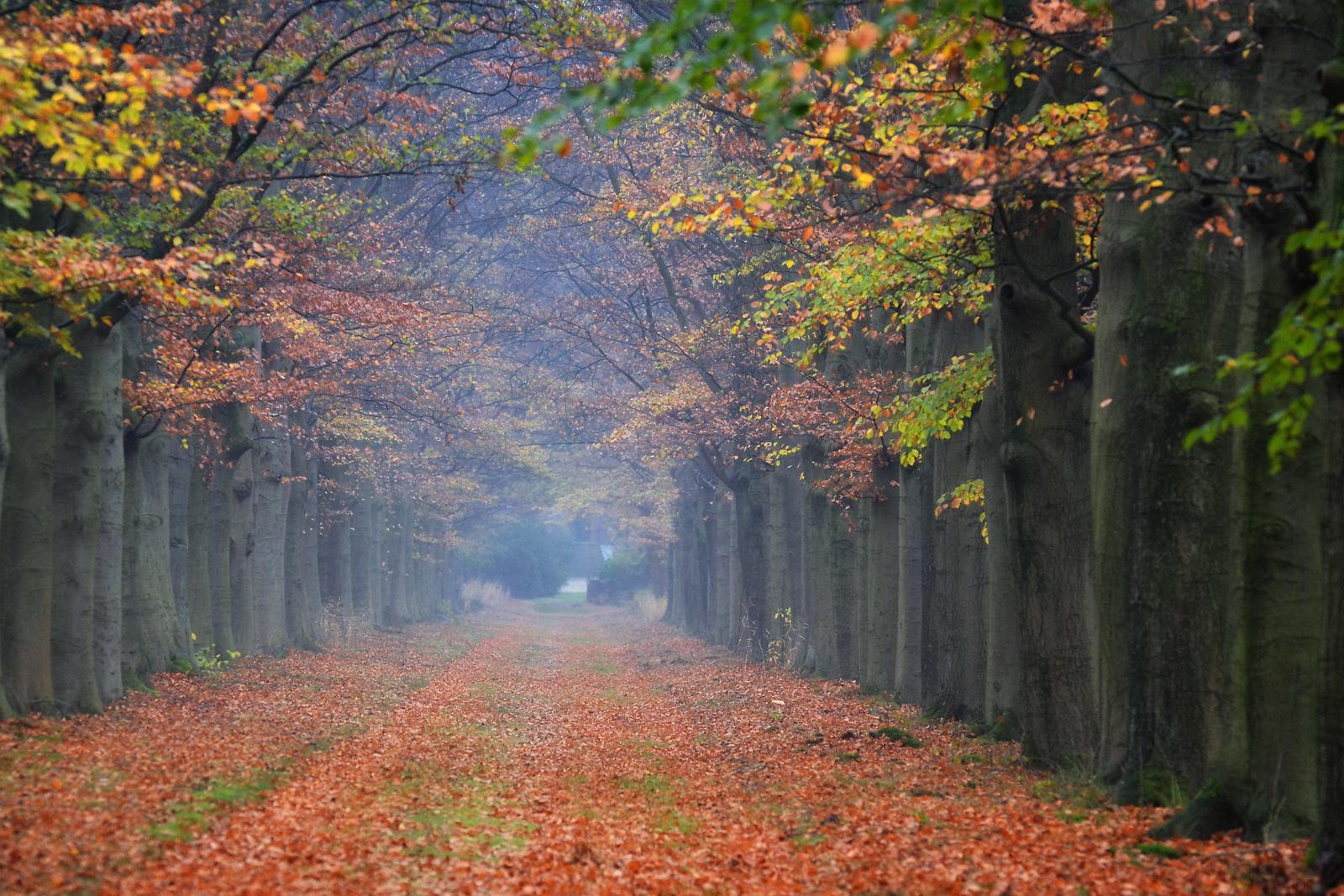 autumn in Holland III