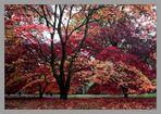 Autumn in Westonbirt Arboretum