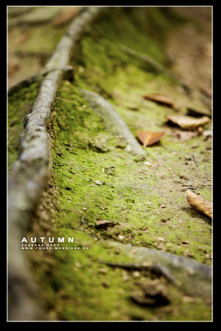 Autumn in Wonderland