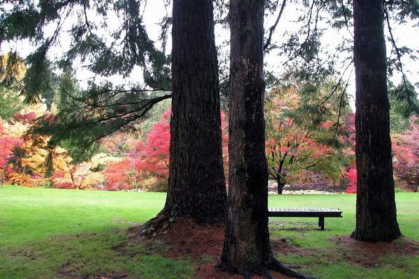 Autumn Interlude