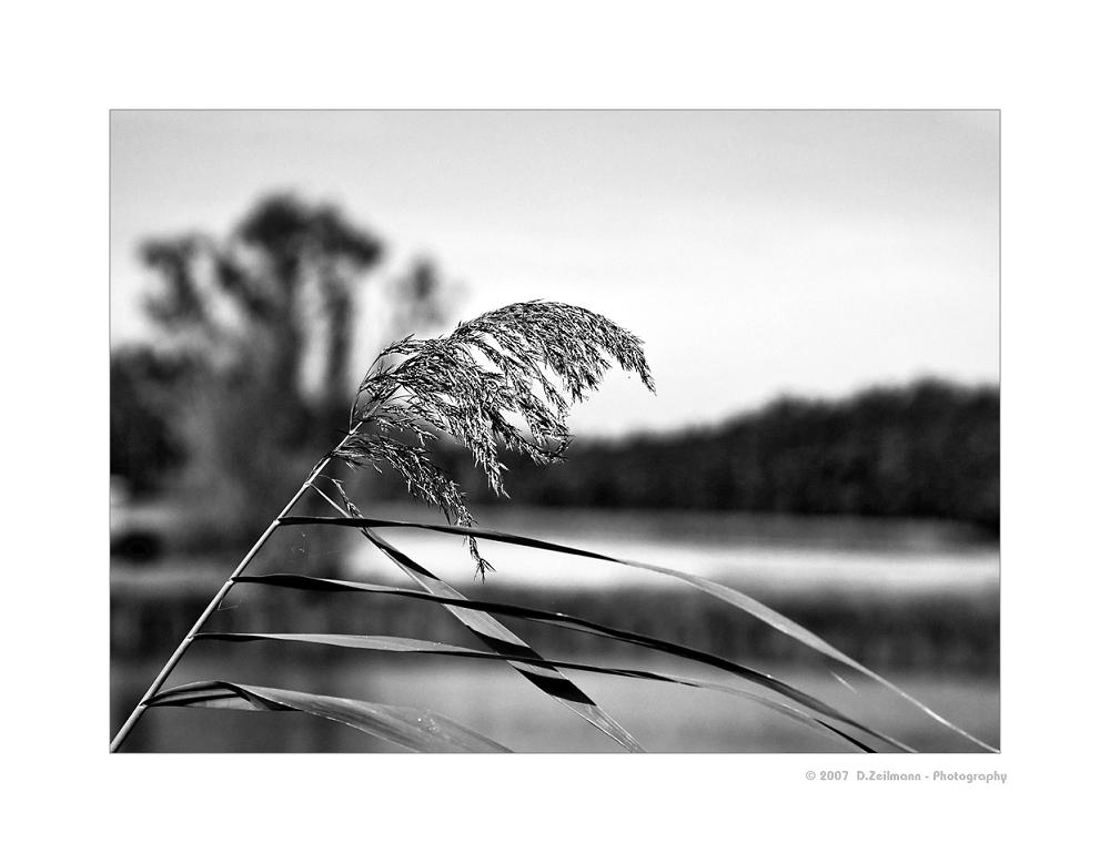 Autumn IV: standhaft...