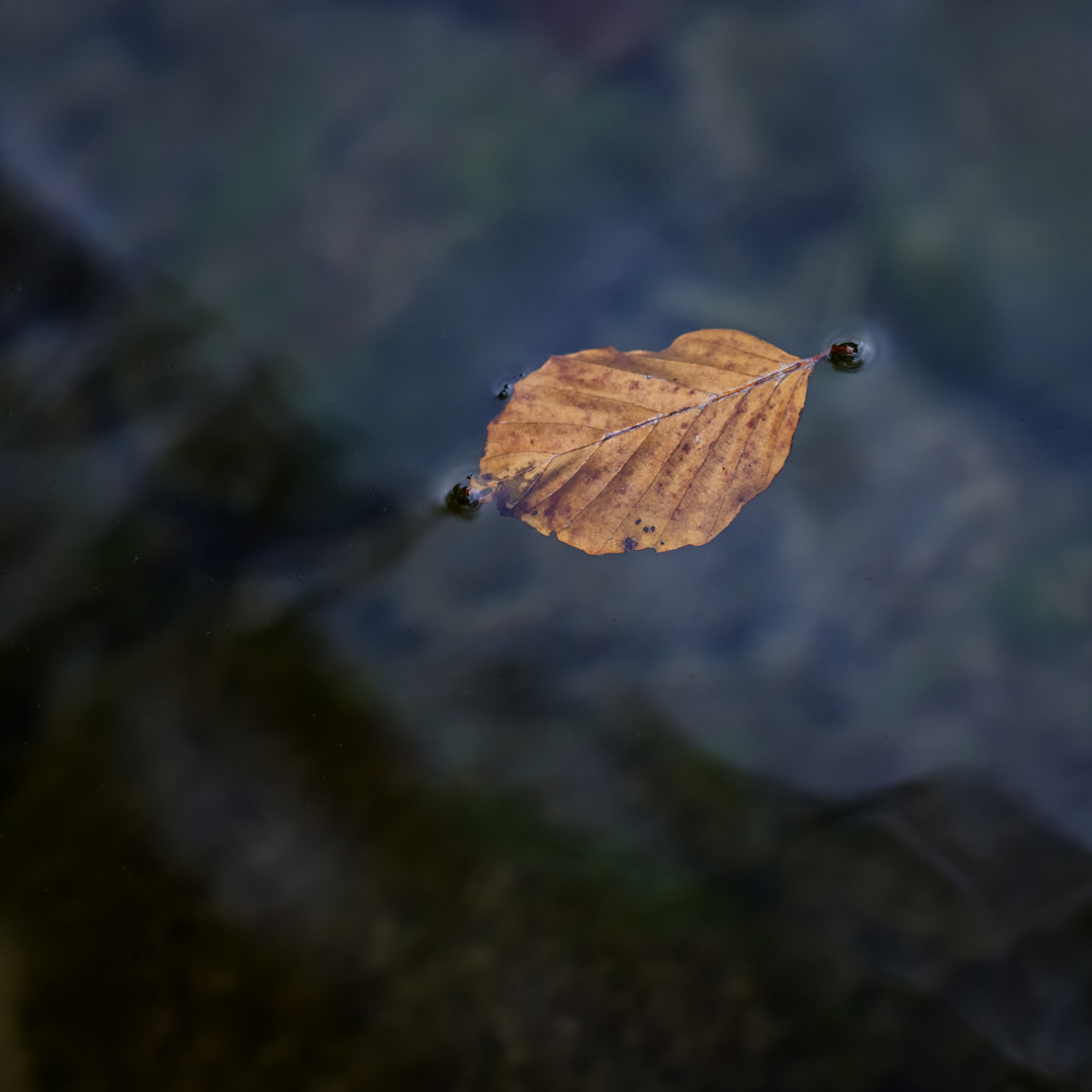 Autumn Leaf 2