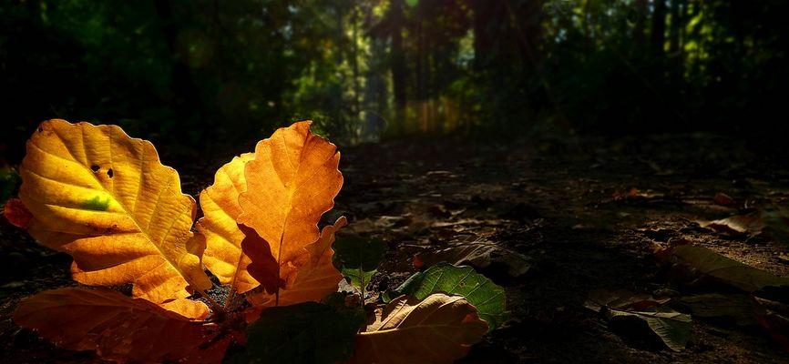 Autumn leaves (10)