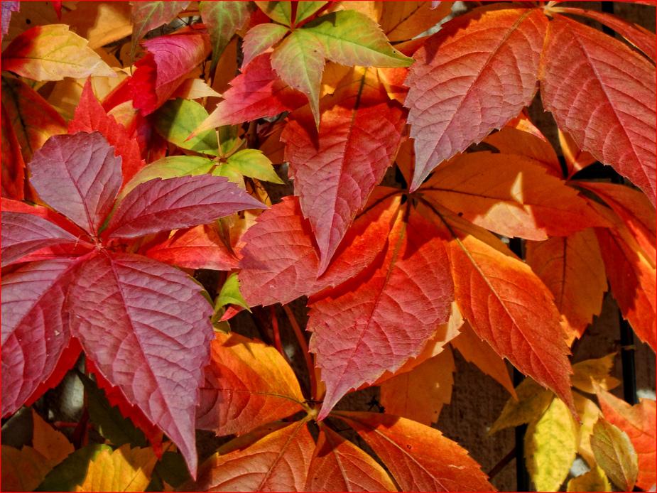 Autumn Leaves......