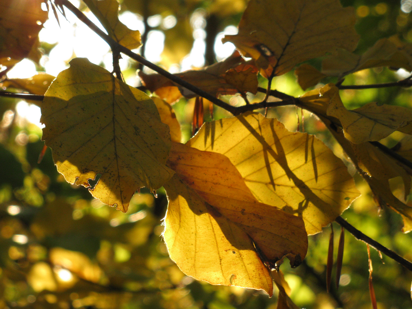 autumn leaves in autumn light