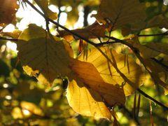 autumn leaves in autumn light