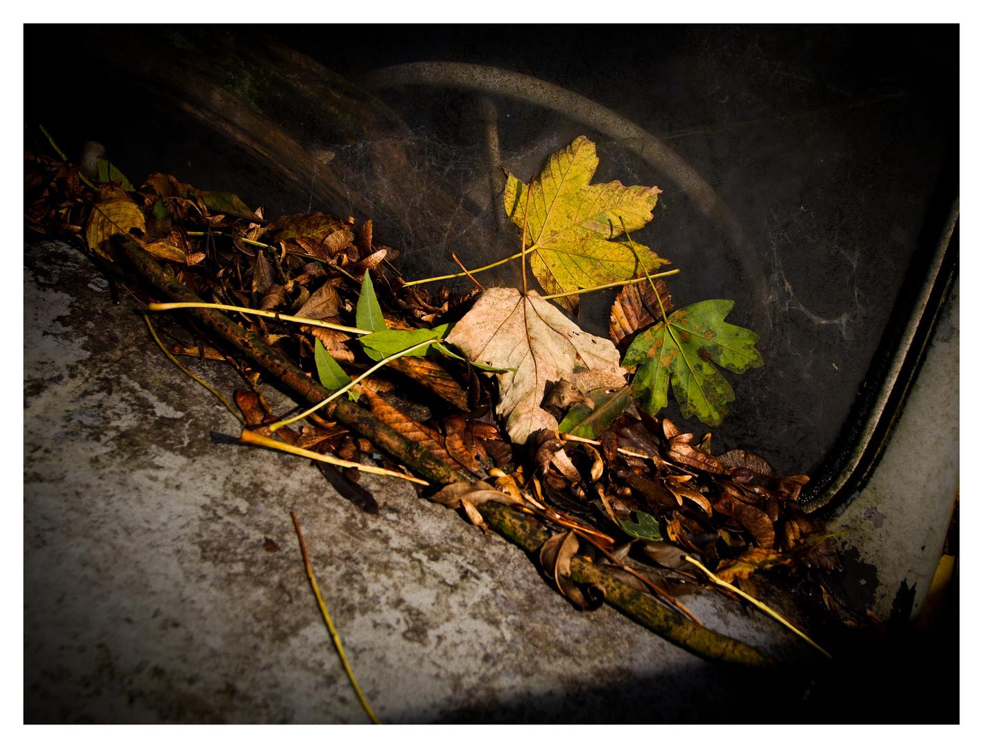 Autumn Leaves Pt.II