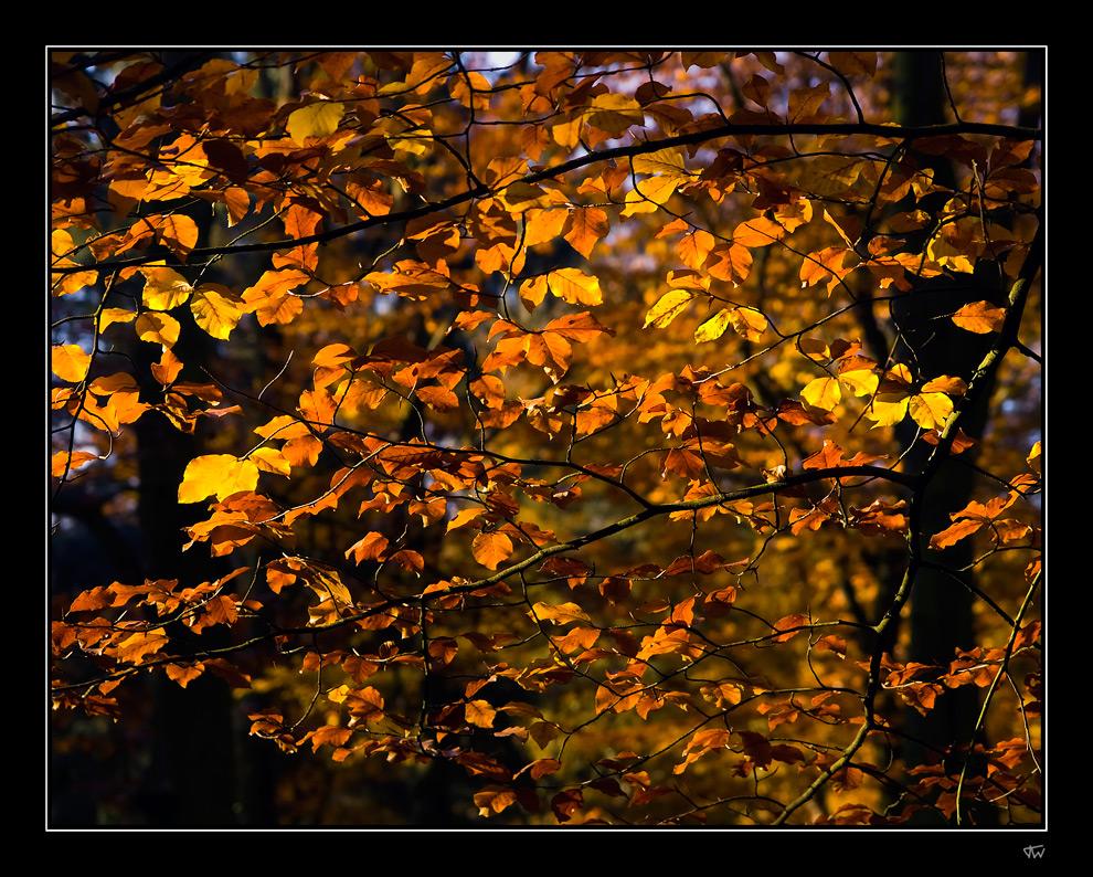 Autumn light I