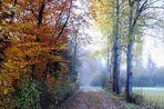 autumn lights (6)
