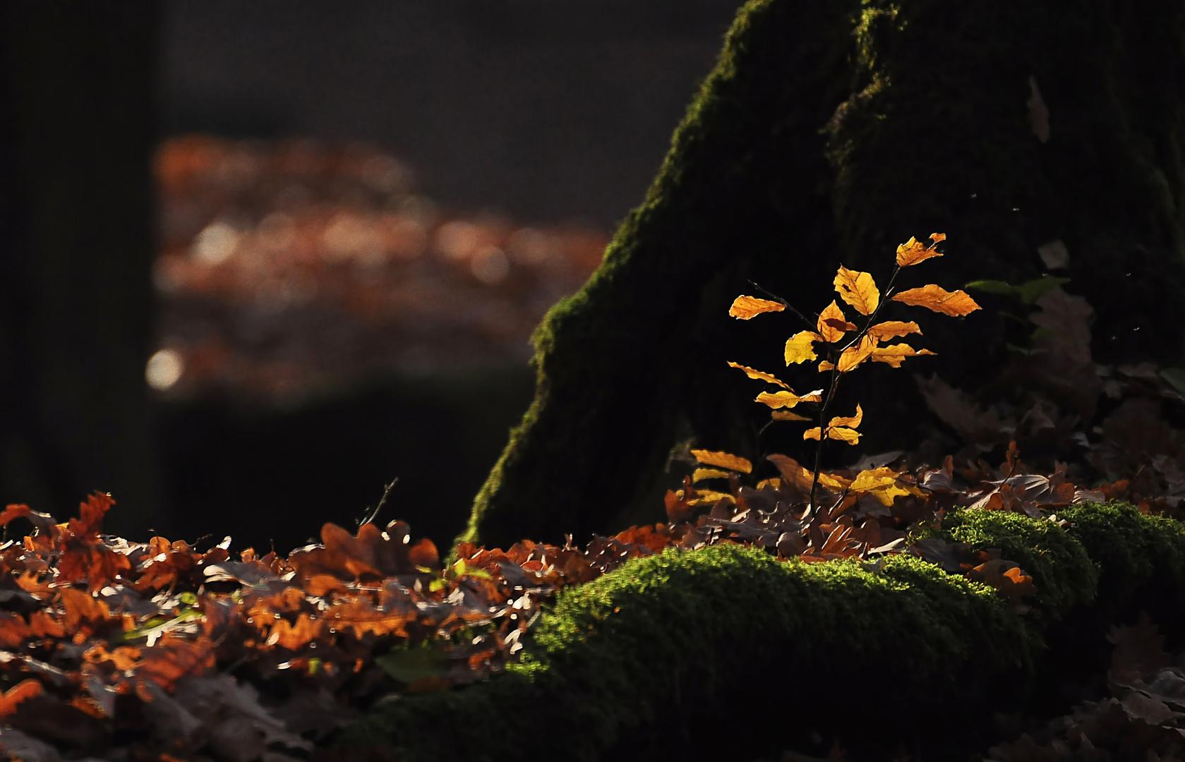 Autumn Lights - 7