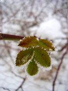 Autumn meets Winter 2