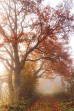 ... autumn memories