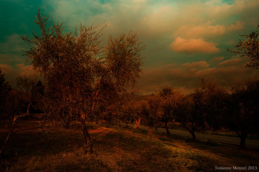 Autumn of Olives