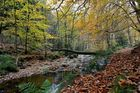 Autumn on the Statte.