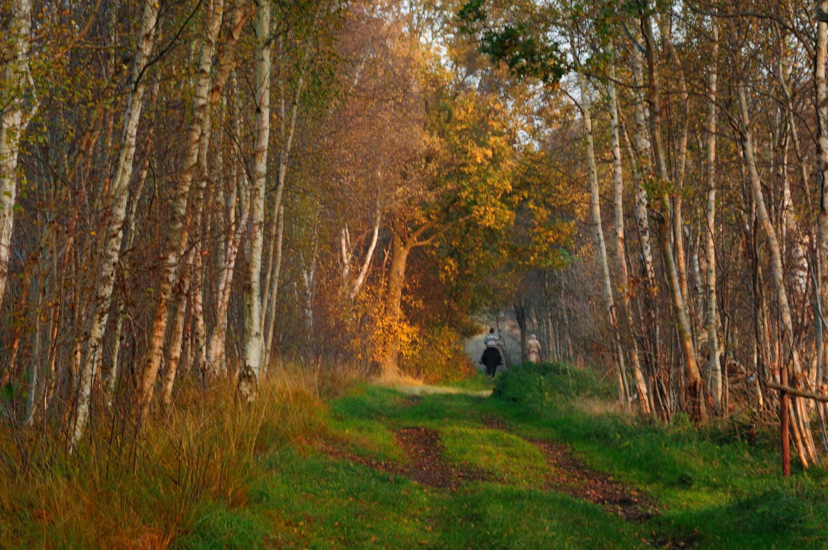 autumn paintings (III)