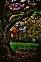 Autumn portrait