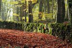 Autumn red carpet under a shy dawning sunlight