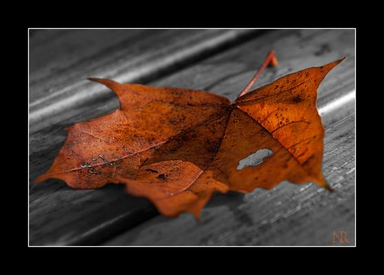 autumn reloaded