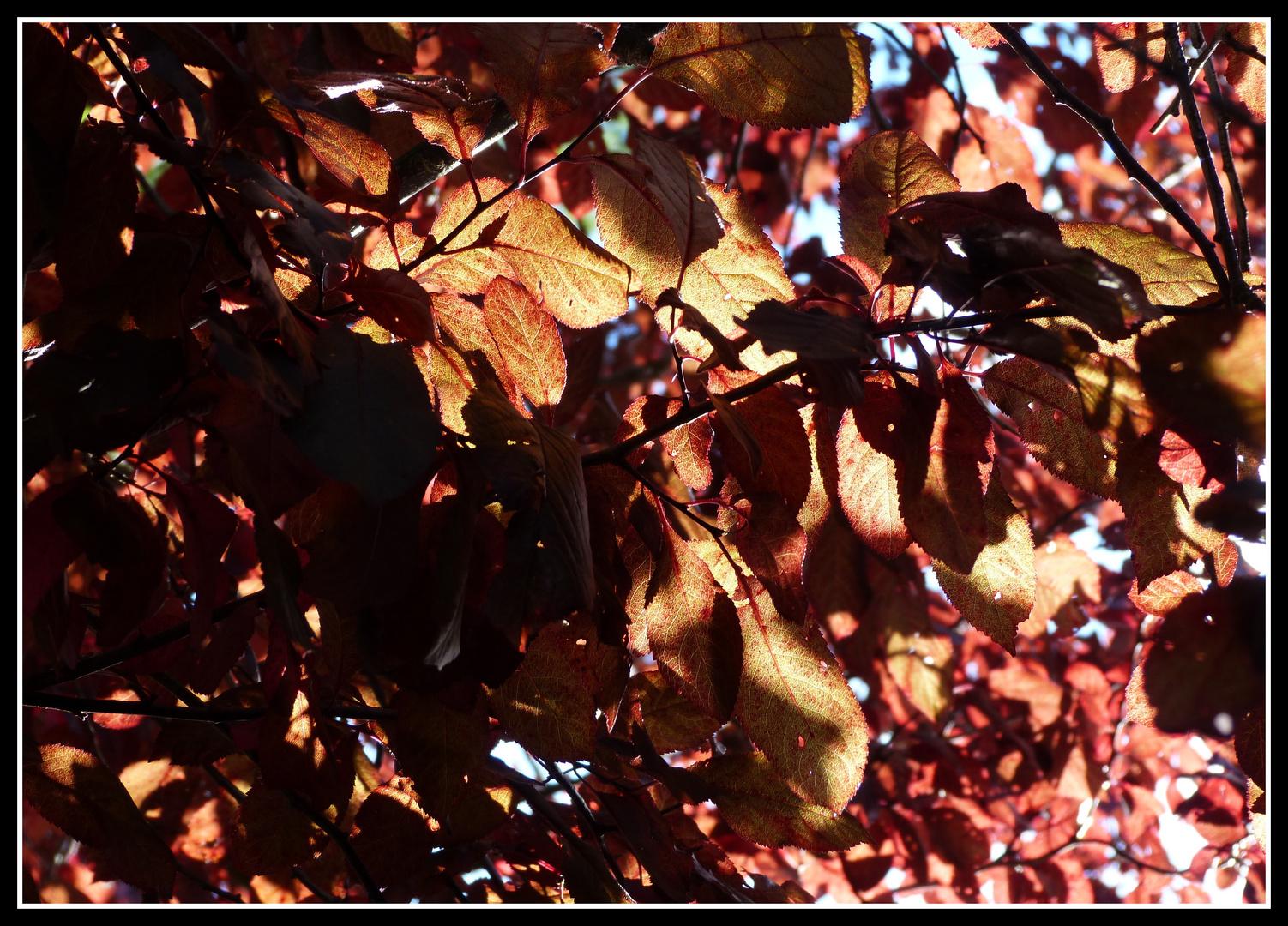 Autumn sheets