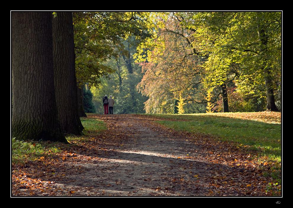 Autumn stroll II