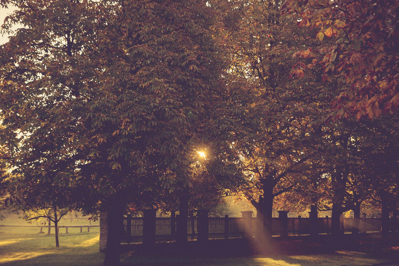 Autumn sunrise II