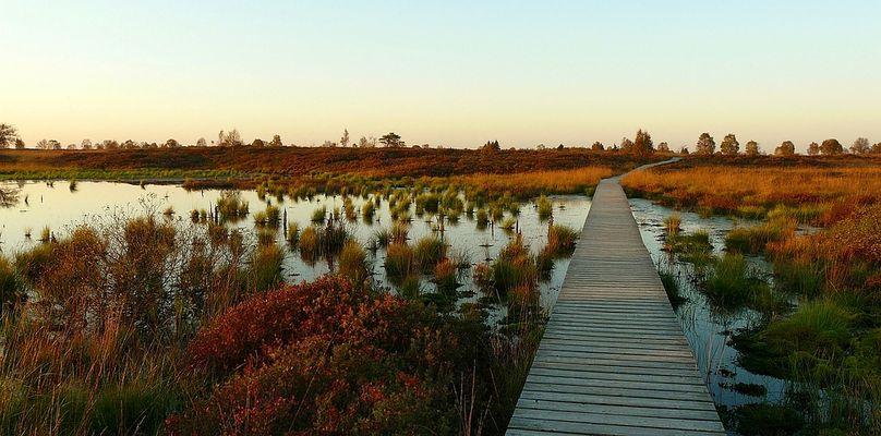 Autumn Swamp (1)