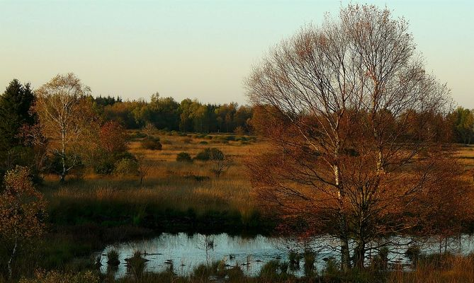 Autumn Swamp (4)