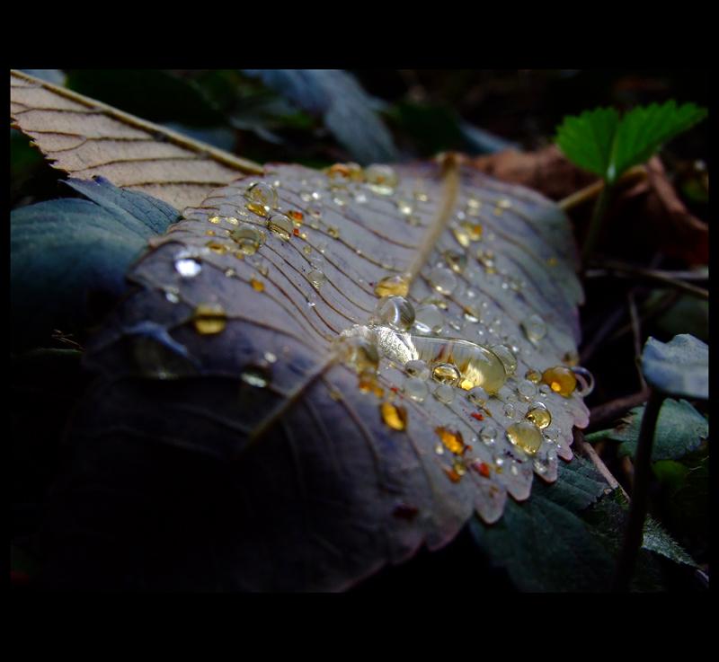 """"""" Autumn teardrops """""""