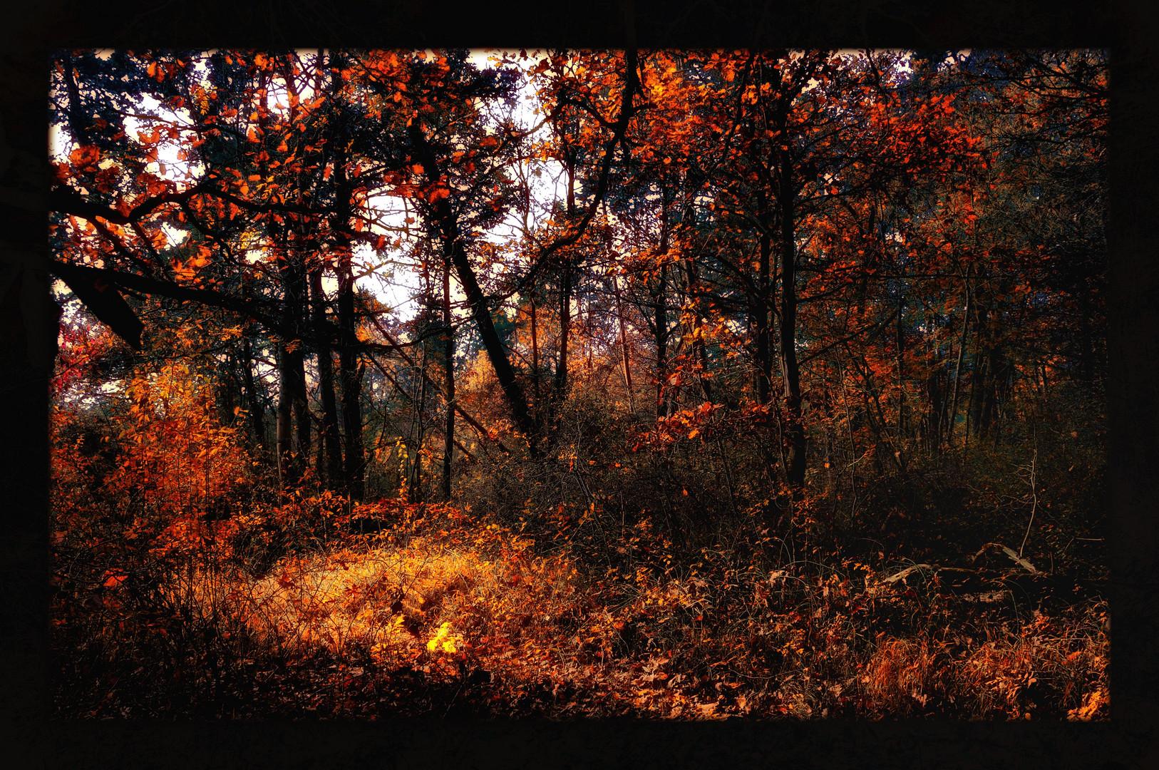 autumn vision