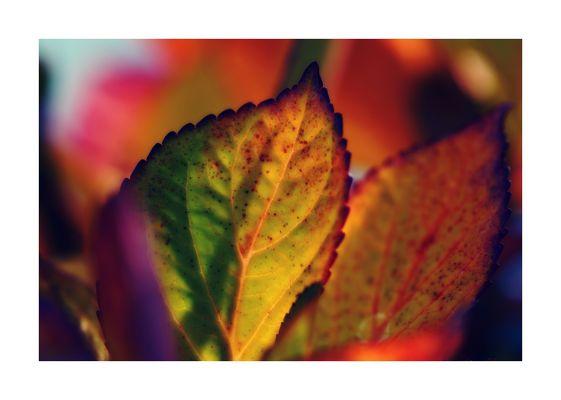AutumnArt