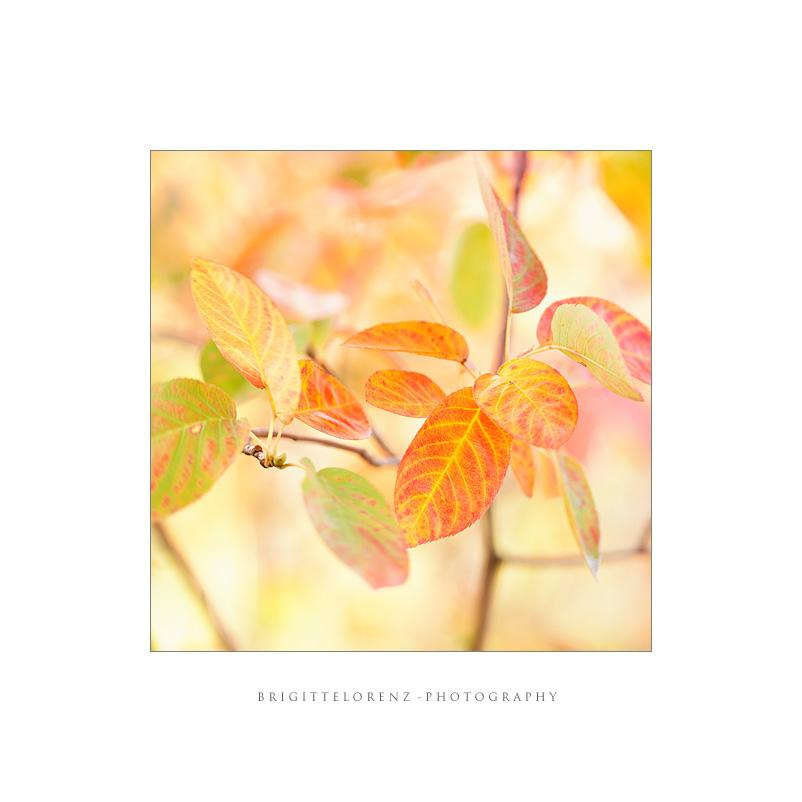 autumns pastel II...