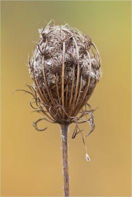 Autunm Flower