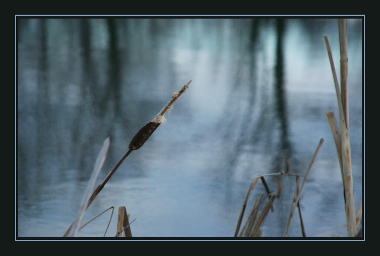 aux abords d'un étang