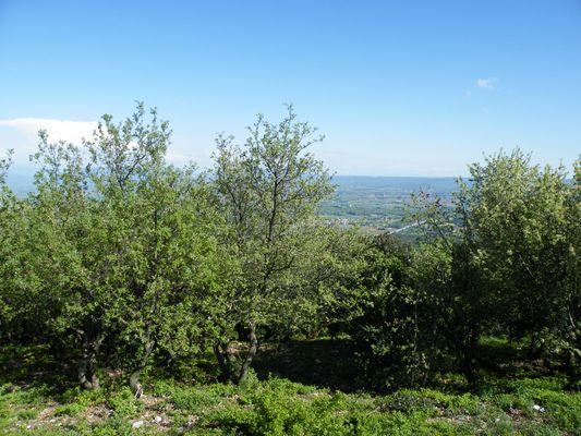 Aux Portes de Provence, le Mont de Savasse