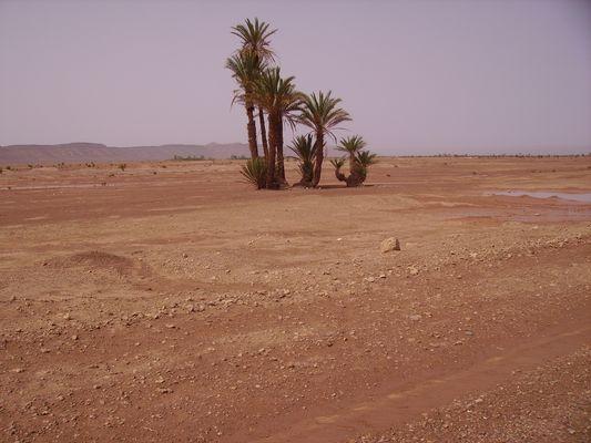 aux portes du desert