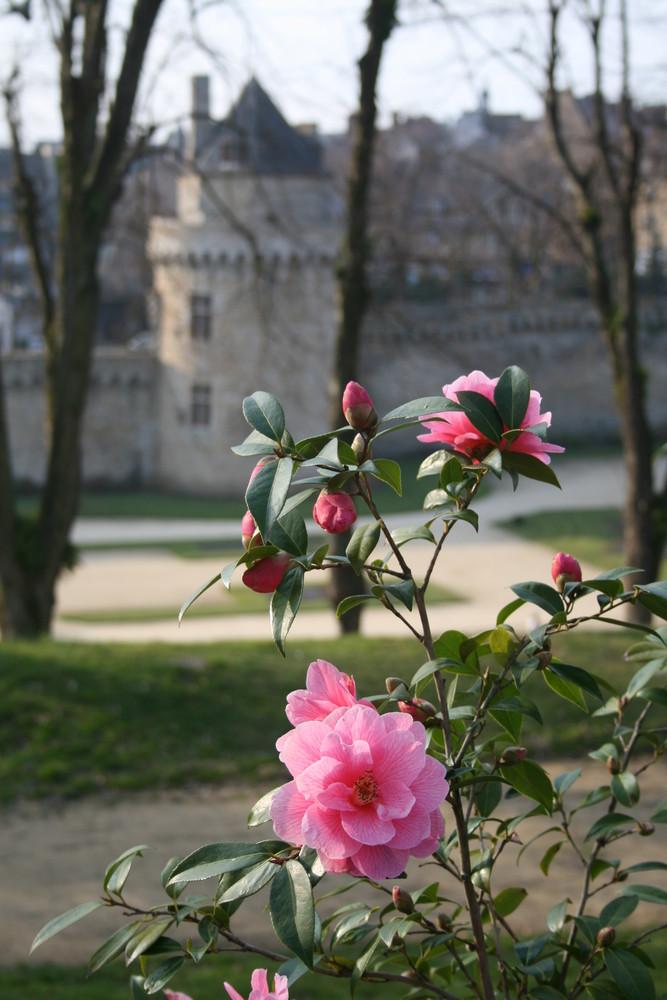 avant-goût du printemps à Vannes