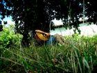 Avec ma guitare