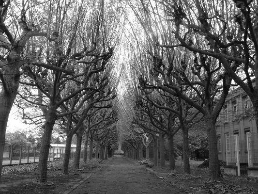 Avenue d'arbres