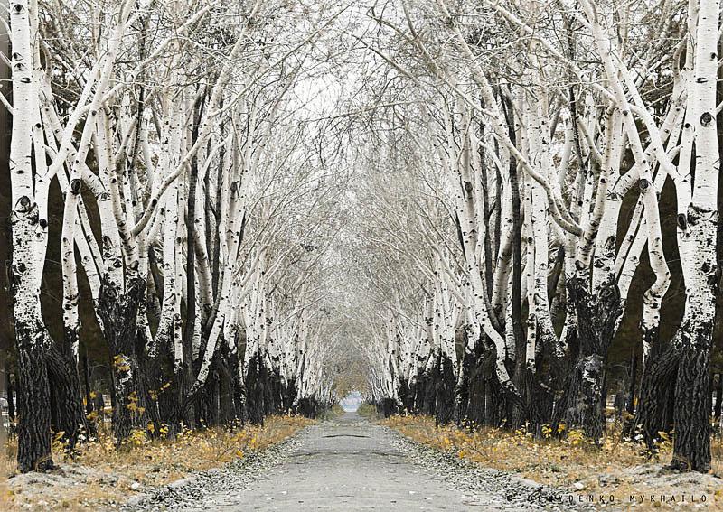 Avenue des peupliers